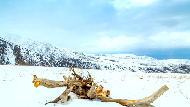 4K Timelapse. A dried tree lies in the snow during a blizzard in the mountains video