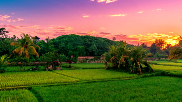 timelapse beautiful sunrise over the jatiluwih rice terraces in bali, indonesia - bali filmów i materiałów b-roll