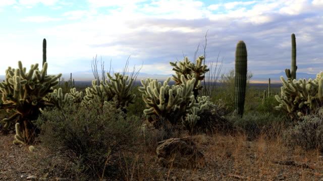 ツーソン山公園でタイムラプス全羅道サボテン - オコティロサボテン点の映像素材/bロール