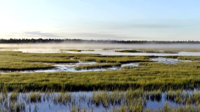 タイムラプス損失の霧の上に日の出湿地の美しいエリアには、ヤマル半島にシベリア - シベリア点の映像素材/bロール
