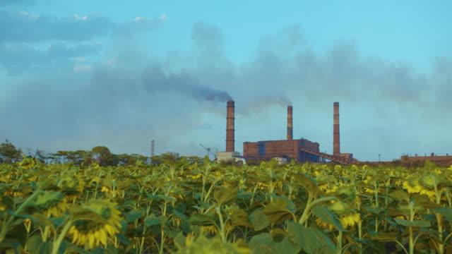 Timelapse fabriek rook stapels billow, dikke rook video