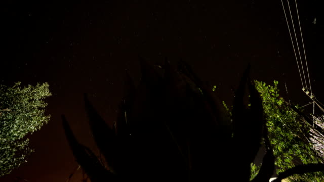 Timelapse from day to night of starry South African night sky, with an aloe in the foreground video