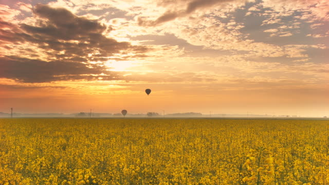 HD Time-Lapse: Hot Air Balloons Over The Canola Field video