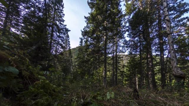 緑の芝生に大きな杉の木の幹の動きでタイムラプス 4 k。 - 移す点の映像素材/bロール