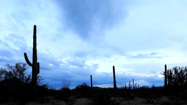 夕暮れ時にツーソン山公園のタイムラプス - オコティロサボテン点の映像素材/bロール