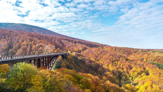 time-lapse: jogakura bridge at hakkoda red leave forest, aomori japan - maple leaf stock videos & royalty-free footage