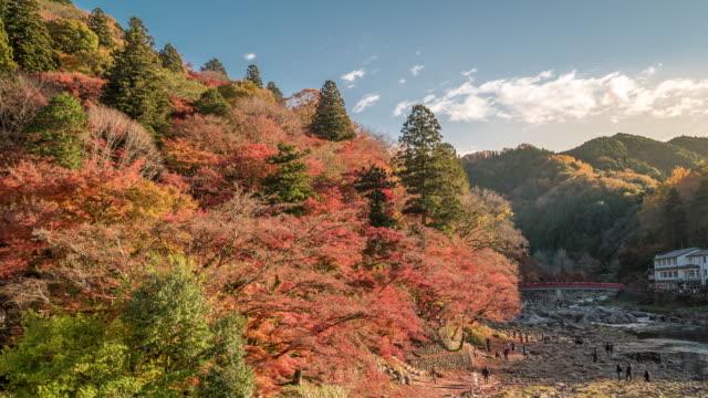 秋の赤のまま名古屋で時間経過: こうらんけい森林公園 - トヨタ点の映像素材/bロール