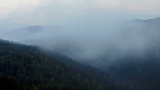 timelapse moving fog above morning forest video