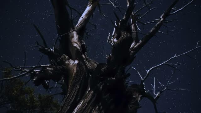 timelapse night video