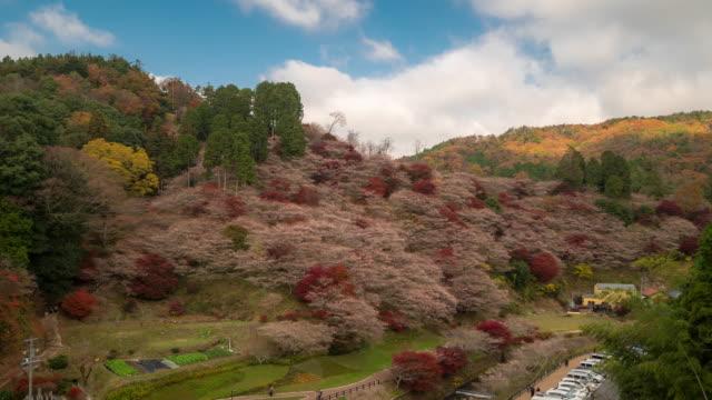 時間経過は: 秋赤小原さくらままトヨタ名古屋 - トヨタ点の映像素材/bロール