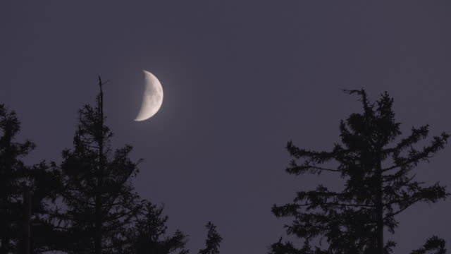 timelapse of a crescent moon over the black forest - полумесяц форма предмета стоковые видео и кадры b-roll