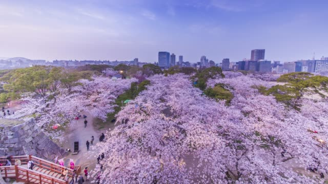 vídeos de stock e filmes b-roll de time-lapse of beautiful cherry blossom flowers over urban city in blue sky - cidade de quioto