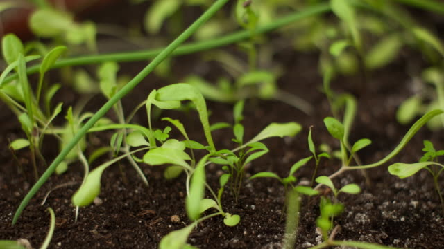 Time-Lapse of Germinating Various Plants Time-Lapse of Germinating Various Plants. crop plant stock videos & royalty-free footage