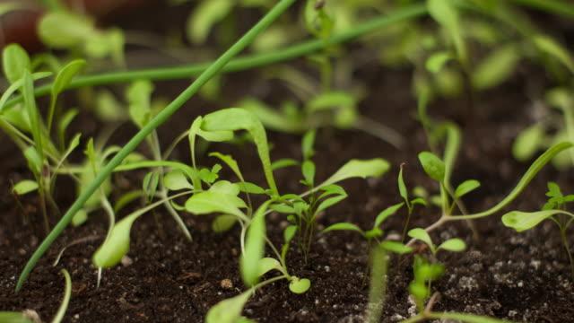 微速度撮影のさまざまな植物発芽 - 苗点の映像素材/bロール