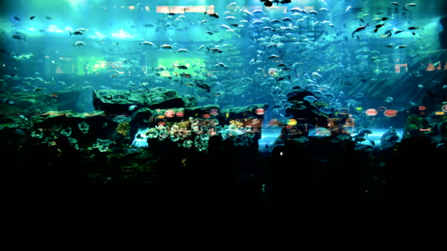 Timelapse of people watching fish at the huge aquarium video