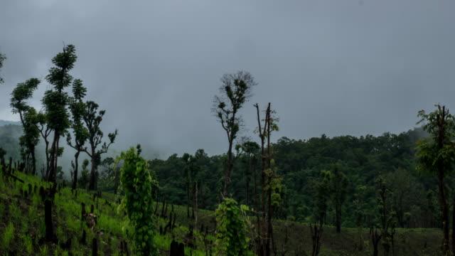 timelapse of rice field in the rain forest - longsheng filmów i materiałów b-roll