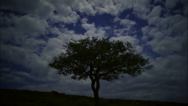 vídeos de stock e filmes b-roll de timelapse of stars and acacia tree on a cloudy night at maasai mara national park. kenya, africa - reserva natural