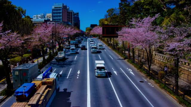Ein Zeitraffer der Kirschstraße an der Yasukuni Avenue in Tokio Weitschuss – Video