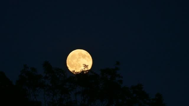 timelapse av månen stiger på klar himmel över trädtoppar på natten - nightsky bildbanksvideor och videomaterial från bakom kulisserna
