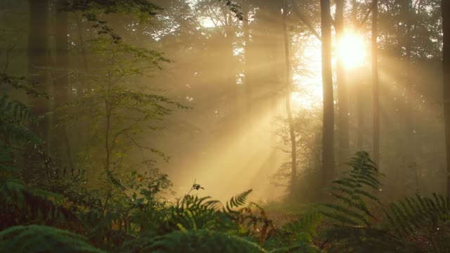 Timelapse of warm sunrays in a foggy forest Time lapse footage of warm rays of sunlight shining through the trees in a foggy forest trees in mist stock videos & royalty-free footage
