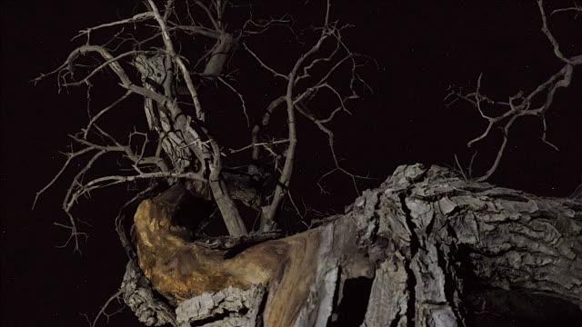 timelapse old walnut video