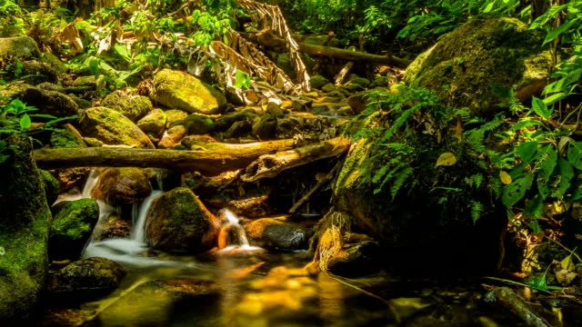 timelapse panning: tiny waterfall in summer video