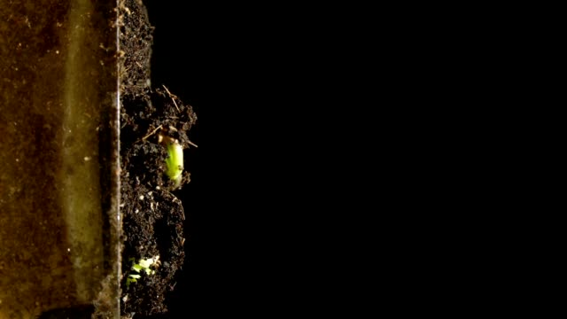 Timelapse photography of plant growth video