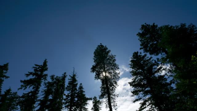タイムラプス嵐雲のショットをの木 - ローアングル点の映像素材/bロール