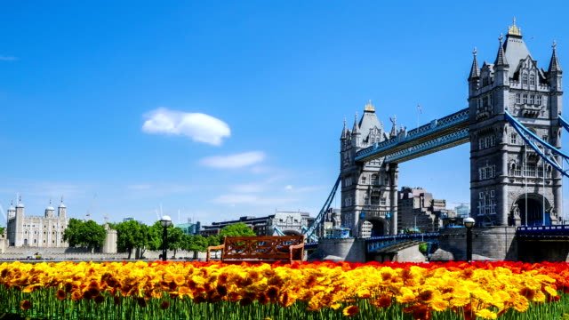 Timelapse shot of Tower Bridge in London on a nice summer day with gerberas in front video