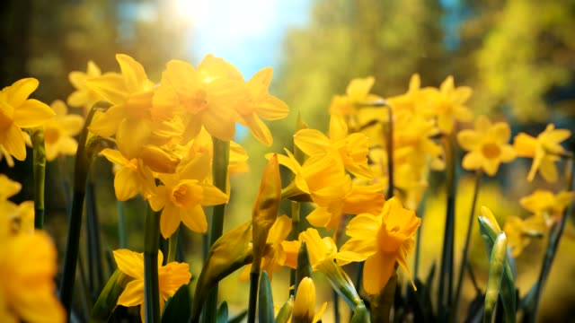 timelapse shot spring is coming - spring stock videos & royalty-free footage