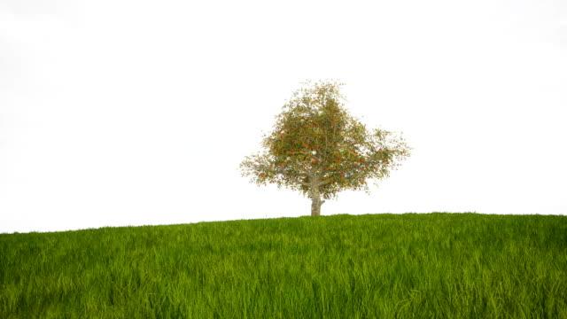 vídeos de stock, filmes e b-roll de um timelapse mostrando uma árvore grande e gramado durante as 4 estações meteorológicas - primavera estação do ano