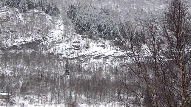 Timelapse snowstorm in Woods Locked Down video