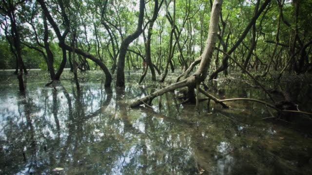 vídeos y material grabado en eventos de stock de timelapse - cambio de marea en el manglar - marea