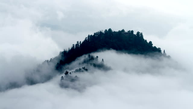 timelapse view in mount emei - trees in mist stock videos & royalty-free footage