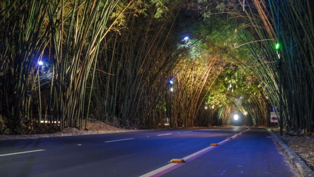 Timelapse View of Road Covered with Bamboo Overgrowth at the Entrance of the Deputado Luís Eduardo Magalhães Airport (SSA) in Salvador, Bahia, Brazil video
