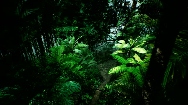 Timelapse view over a beautiful lush green jungle. 4K