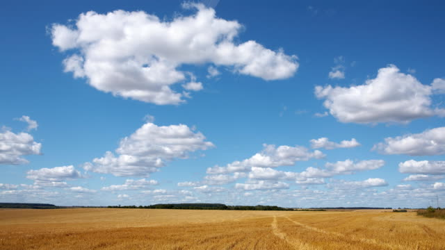 Time-lapse: white clouds flying on blue sky over yellow field video