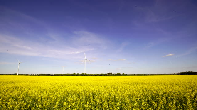 time-lapse :wind turbine with mountain view - canola video stock e b–roll