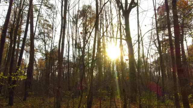 Timelapse with crane, beautiful autumn forest at sunset video