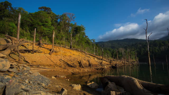 timelapse:dead trees in the lake video