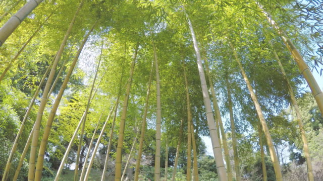 Tiny Bamboo Forest video