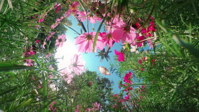 Tiny planet 360 flower field Tiny planet 360 flower field butterfly stock videos & royalty-free footage