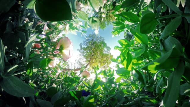 tiny planet 360 flower field
