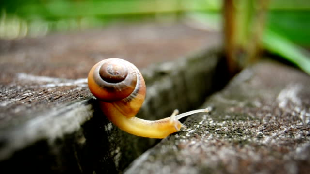 Tiny Snail - Reaching and Climbing video