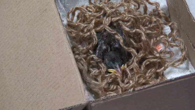 Tiny Sparrow in a box video