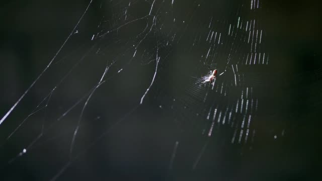 Tiny spider attacking it's pray that fly into spider web on dark background.