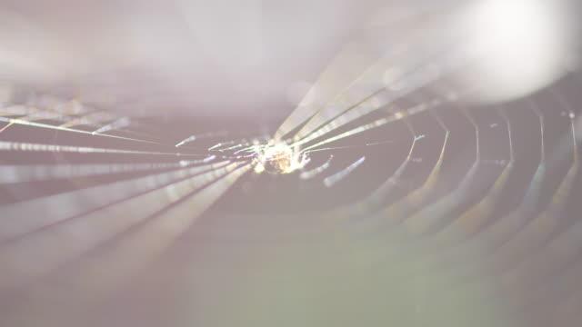 liten spindel i nätet - spindelväv bildbanksvideor och videomaterial från bakom kulisserna