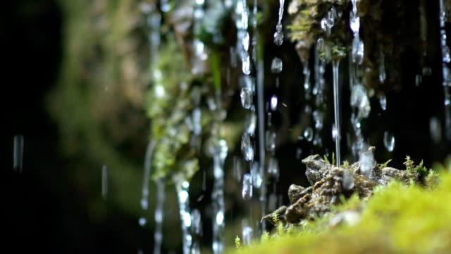 piccola cascata dribbling su moss primo piano - muschio flora video stock e b–roll