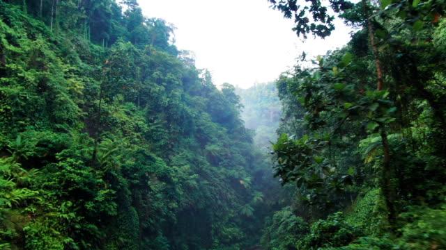 vídeos y material grabado en eventos de stock de pequeña cascada en bosque tropical. indonesia, bali, drone aéreo, cámara lenta. - terreno extremo