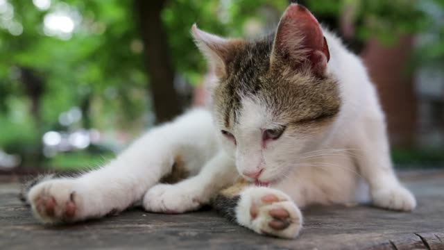 tired cat preening and trying to get some sleep - уход за поверхностью тела у животных стоковые видео и кадры b-roll